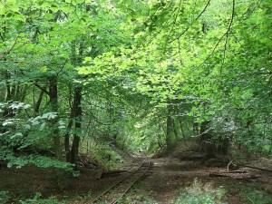 Lea Bailey Railway
